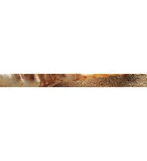 Бардюр Сиерра 3   (ракушка) 50*4,7