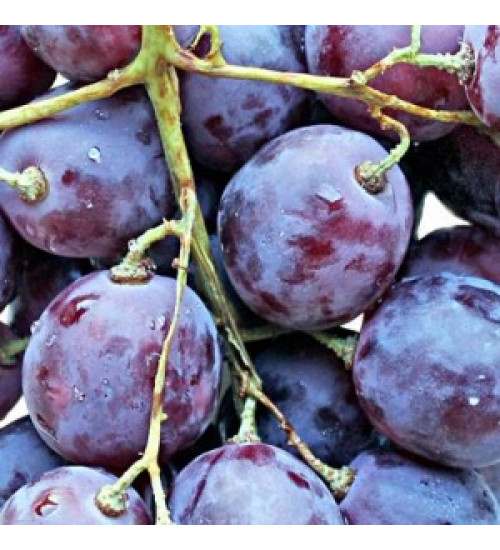 (04-00-35-140-7) Декор Фрукты виноград -3 200*200*7,5мм