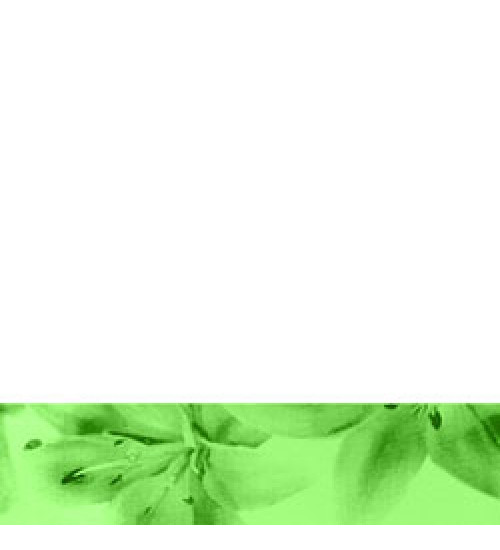 (260021) Моноколор Бордюр 40*12 салатный